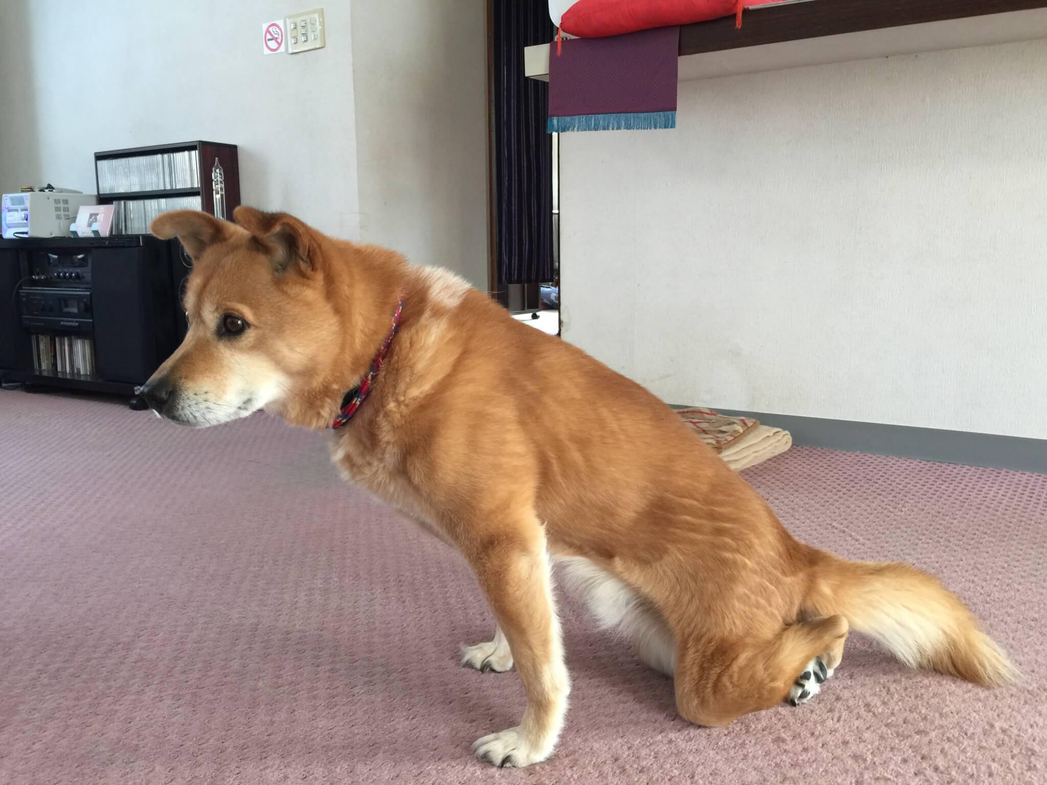 札幌整体治療院 谷井治療室 犬写真