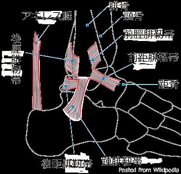 札幌足の痛み整体治療院・足関節画像