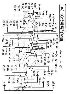 札幌背中の痛み整体治療院 経穴図