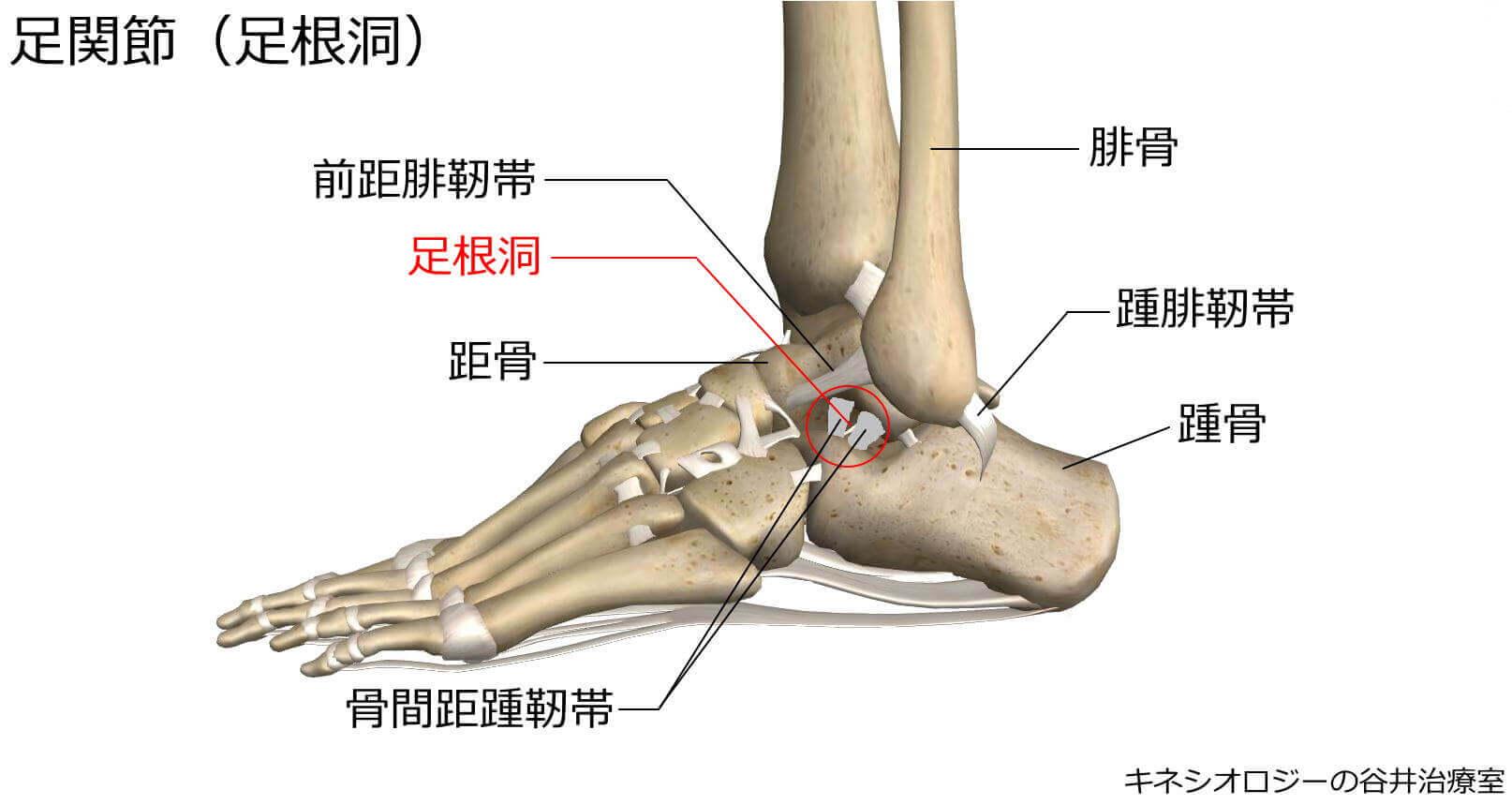 札幌足の痛み専門整体治療院・足根洞