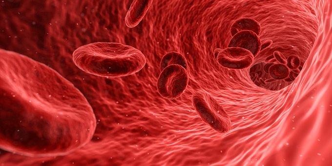 札幌整体治療院 谷井治療室 赤血球画像