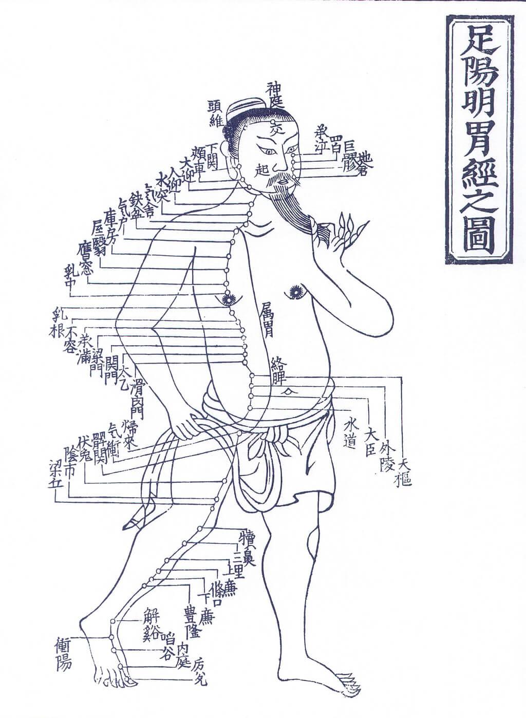 札幌整体治療院 谷井治療室 胃経の図
