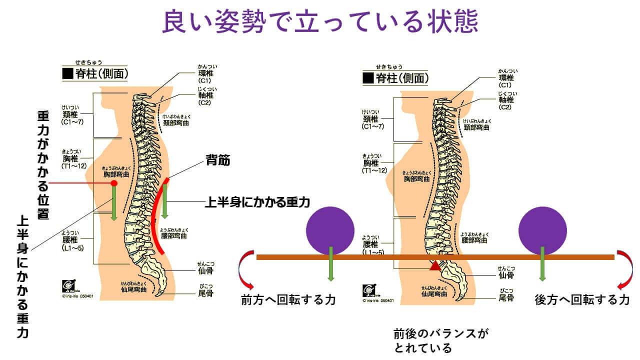 姿勢と椎間板の圧力