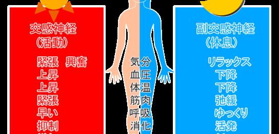 自律神経・交感神経・副交感神経