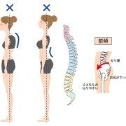 背骨と姿勢