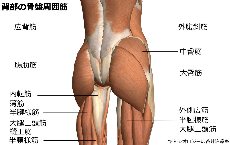 背部の骨盤周囲筋