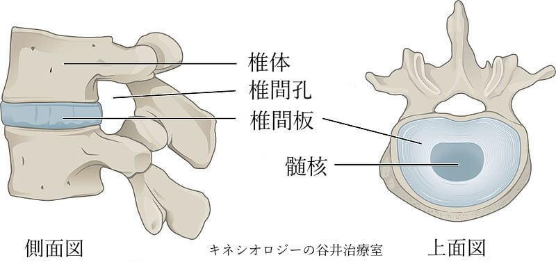 椎間関節画像